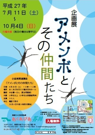 高槻市立自然博物館(あくあぴあ芥川)企画展「アメンボとその仲間たち」への協力